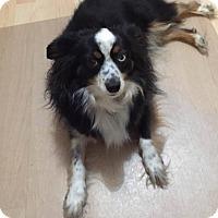 Adopt A Pet :: Zoie - Minneapolis, MN