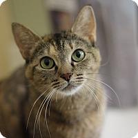 Adopt A Pet :: Diana - Richmond, VA
