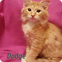 Adopt A Pet :: Dodge - Fort Pierce, FL