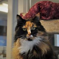 Adopt A Pet :: Isabella - Jackson, WY