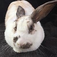 Adopt A Pet :: Georgia - Watauga, TX