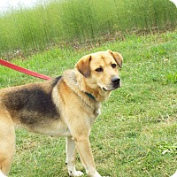 Adopt A Pet :: Sable - Shelby, MI
