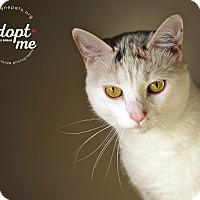 Adopt A Pet :: Chulee - Lyons, NY