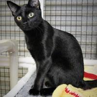 Adopt A Pet :: Poppy - Morgan Hill, CA