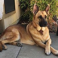Adopt A Pet :: Chloe May - Sacramento, CA