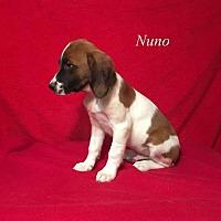 Adopt A Pet :: Nuno - Chester, IL