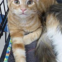 Adopt A Pet :: Crush - Logan, UT