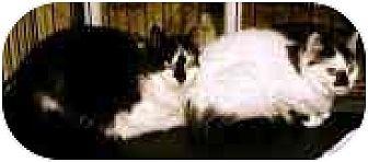 Domestic Mediumhair Cat for adoption in Trexlertown, Pennsylvania - Barn Cats!