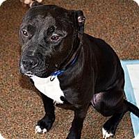 Adopt A Pet :: Zeus - Westfield, IN