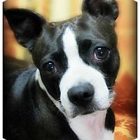 Adopt A Pet :: Dakota - Pascagoula, MS