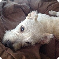 Adopt A Pet :: Cha cha - San Diego, CA