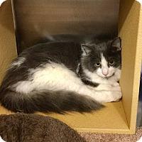 Adopt A Pet :: Drew - Colmar, PA