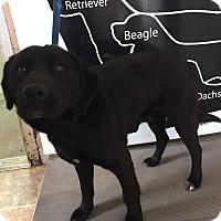 Adopt A Pet :: Swiss Roll - Lewisburg, TN
