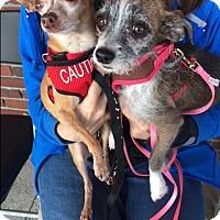 Adopt A Pet :: Pancho and Mimi - Brick, NJ
