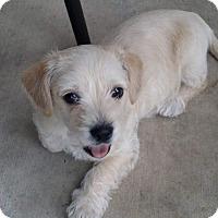 Adopt A Pet :: JINX - seeking foter to adopt - Hurricane, UT