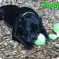Adopt A Pet :: Molly - Woodinville, WA