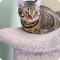 Adopt A Pet :: Sunny - Virginia Beach, VA