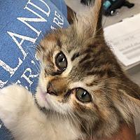 Adopt A Pet :: Maria - Jackson, MI