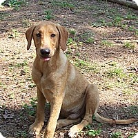 Adopt A Pet :: Earl Ray - Conway, AR