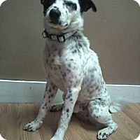 Adopt A Pet :: Mickey - Garwood, NJ