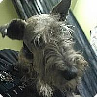 Adopt A Pet :: Scotty Boy - Crystal River, FL