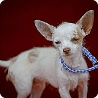 Adopt A Pet :: Peanut - Los Angeles, CA