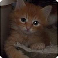 Adopt A Pet :: Malana - Acme, PA