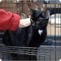 Adopt A Pet :: Patrick **Courtesy Listing** - Florence, AL