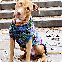 Adopt A Pet :: Lucy - New York, NY
