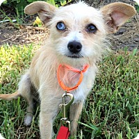 Adopt A Pet :: Florence - Mission Viejo, CA