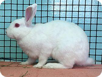 Dwarf Mix for adoption in San Clemente, California - TRIXIE