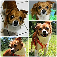 Adopt A Pet :: Thatcher - Forked River, NJ