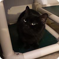 Adopt A Pet :: Miami - Geneseo, IL