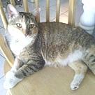 Adopt A Pet :: Daisy - West Palm Beach, FL