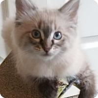 Adopt A Pet :: Elsi - North Highlands, CA