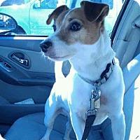 Adopt A Pet :: Max - Blue Bell, PA