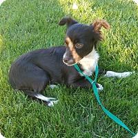 Adopt A Pet :: ROSIE-ADOPTED!! - Lynnwood, WA