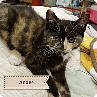 Adopt A Pet :: Andee - Overland Park, KS