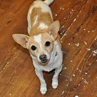 Adopt A Pet :: Mindy - Prosser, WA