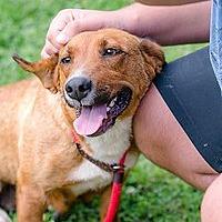 Adopt A Pet :: Jessie - Charlotte, NC