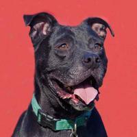 Adopt A Pet :: Captain Crunch *Foster* - Glen Allen, VA