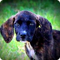 Adopt A Pet :: Crosby - Glastonbury, CT