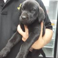 Adopt A Pet :: Pico - Paducah, KY