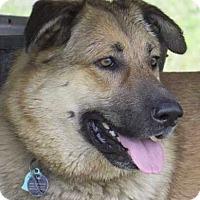 Adopt A Pet :: Bella - Sealy, TX
