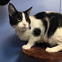 Adopt A Pet :: SMOOSH - Canfield, OH