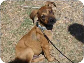 Shepherd (Unknown Type) Mix Puppy for adoption in Haughton, Louisiana - Finn