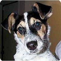 Adopt A Pet :: ZEKE - Scottsdale, AZ