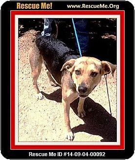 German Shepherd Dog Dog for adoption in West Los Angeles, California - Stella