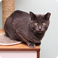 Adopt A Pet :: Horace - San Antonio, TX