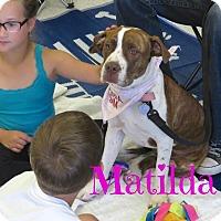 Adopt A Pet :: Matilda - Scottsdale, AZ